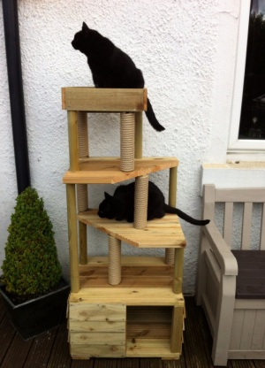 Cat Climbing Towers Com