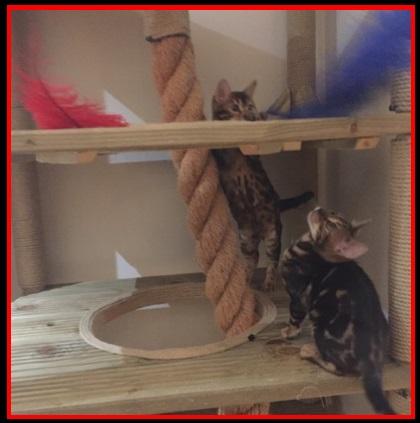 Cat Climbing Towers Com