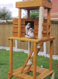 We Only Products That Think Are Of The Highest Quality And Sure Your Cat Will Love Their Outdoor Toy